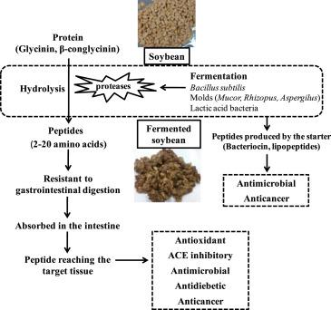 При ферментации сои возникают полезные для здоровья пептиды