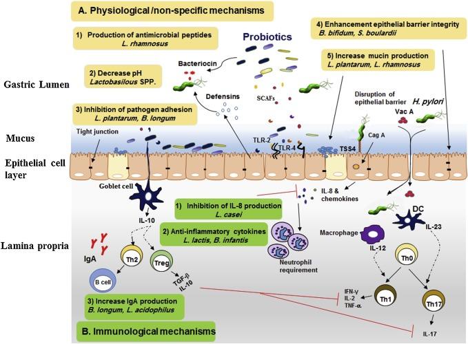 Пробиотики против Хеликобактер пилори
