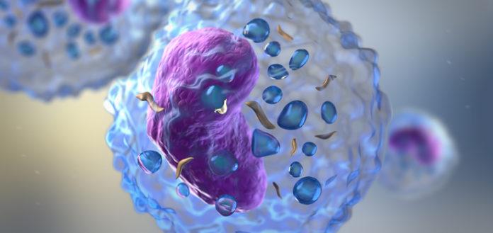 Нейтрофилы первые защитники нашего тела от инфекций