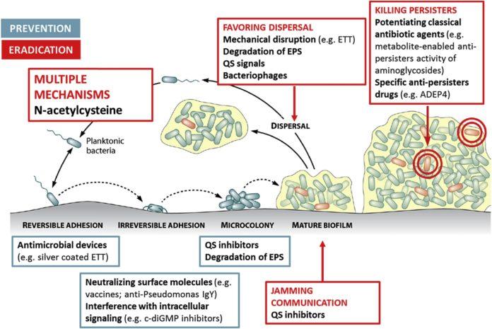 Ацетилцистеин может использоваться в борьбе с бактериальной биопленкой
