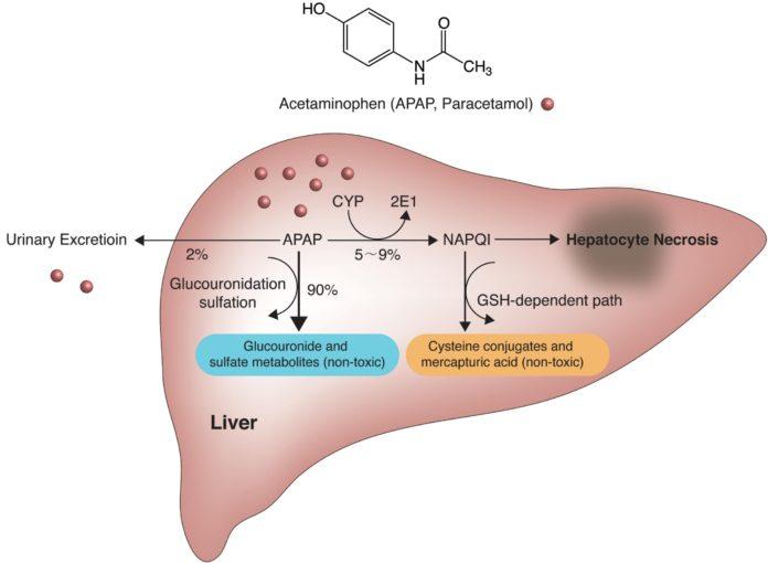 Парацетамол может быть токсичен для печени