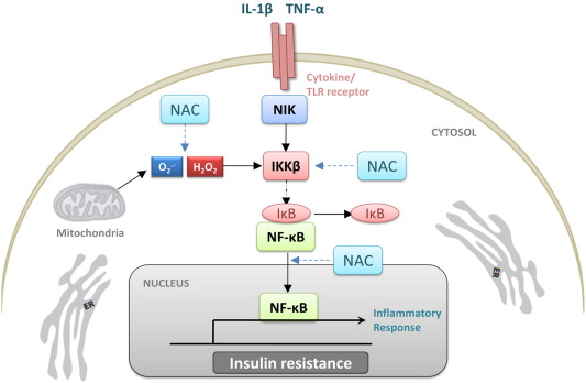 Ацетилцистеин (NAC) снижает риск развития диабета