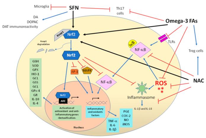 Ацетилцистеин (NAC) проявляет антиоксидантные и противовоспалительные возможности