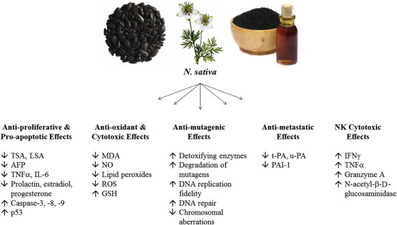 Семена черного тмина оказывают значительное влияние на иммунитет