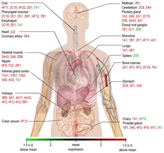 Экспрессия гена CYP1A1
