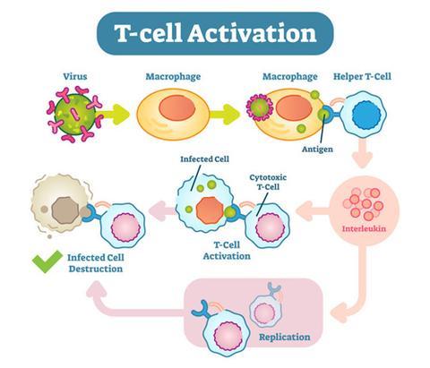 Чага активирует противовирусные иммунные клетки