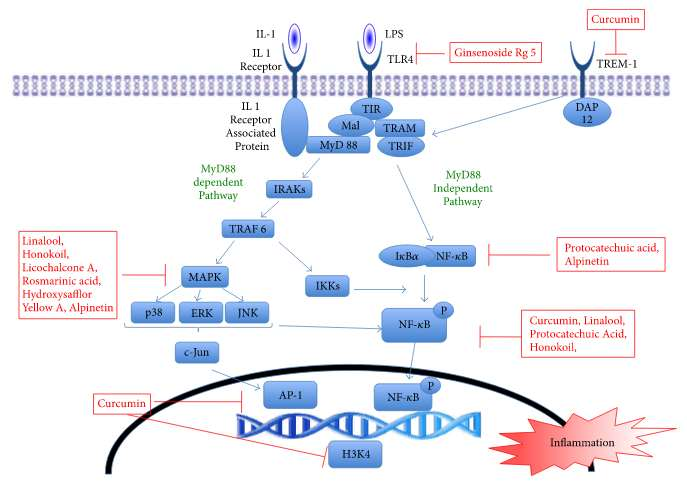 Природные вещества для снижения воспаления при ОРДС