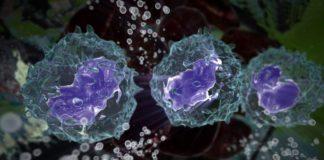 Интерфероны 1 типа против вирусов гриппа и коронавируса