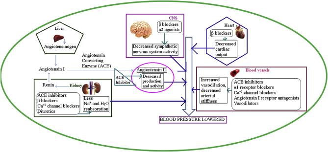 Грибы способствуют снижению артериального давления