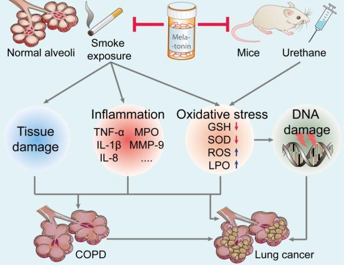 Мелатонин помогает в лечении ХОБЛ