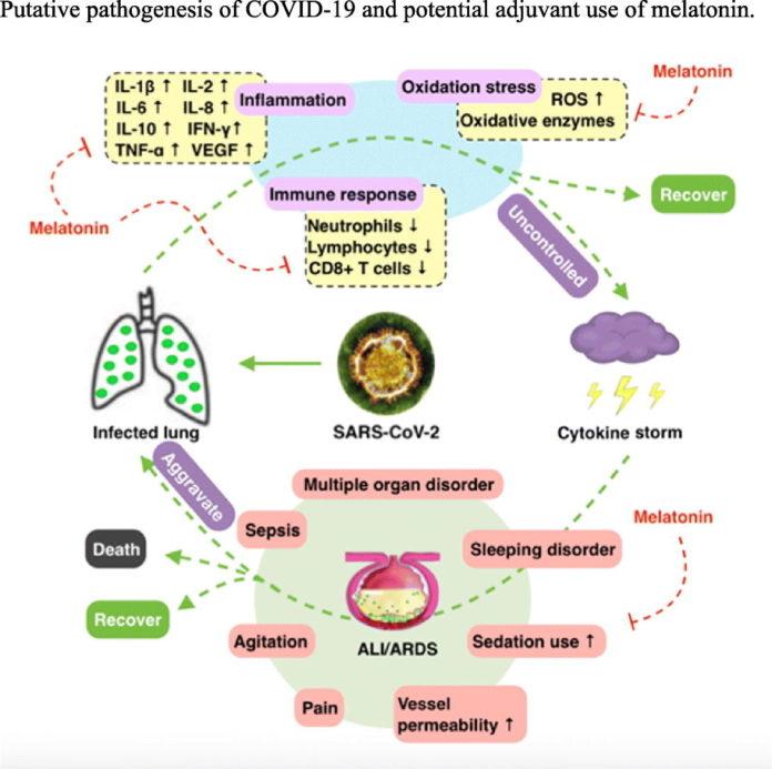 Лечение мелатонином ОРДС при COVID-19