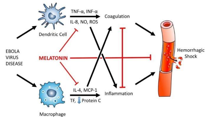 Мелатонин для лечения лихорадки Эболы