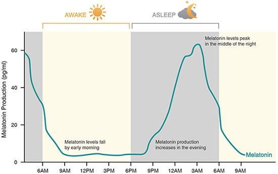 График суточной выработки мелатонина