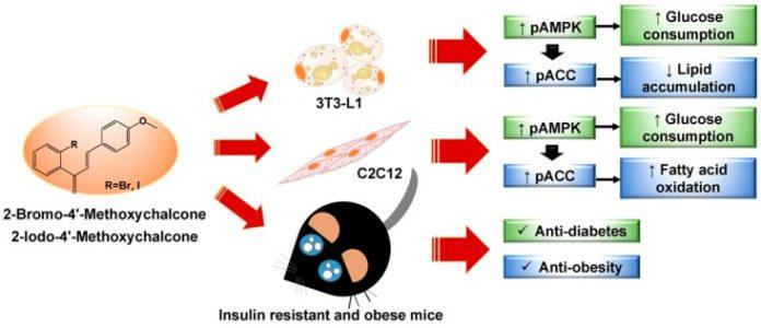 Халконы в Ашитаба могут быть полезны при диабете и ожирении