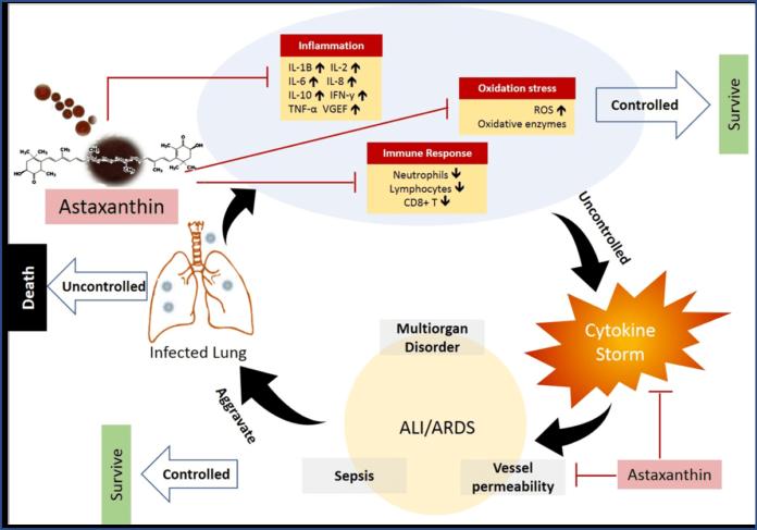Астаксантин может применяться в дополнительной терапии COVID-19