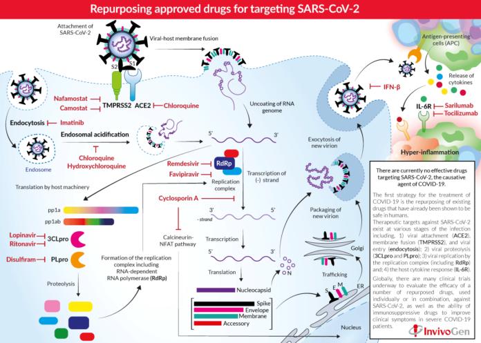 Ашитаба может быть одним из веществ, помогающих в лечении COVID-19