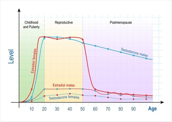 Уровни тестостерона и эстрогена с возрастом у мужчин и женщин