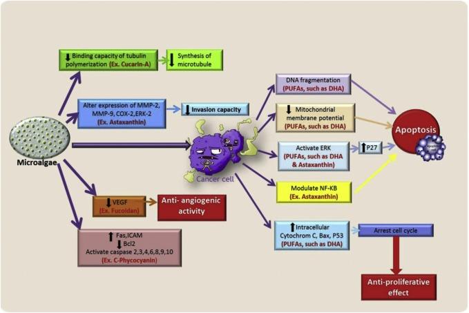 Микроводоросли, в том числе хлорелла, рассматриваются для лечения рака