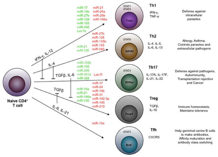 Иммунные Т-клетки