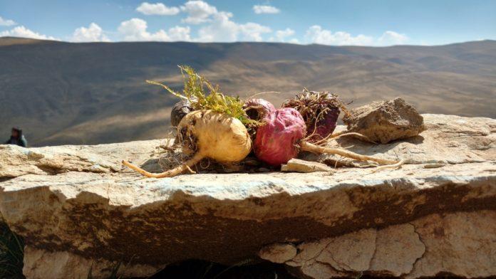 Мака перуанская и её польза для здоровья