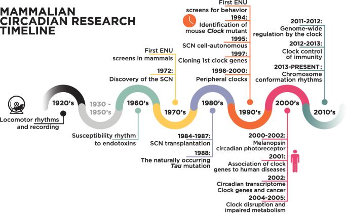Результаты исследований по биологическим ритмам млекопитающих