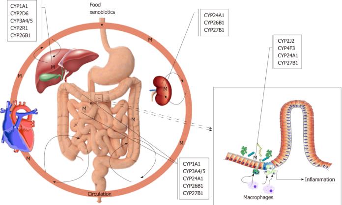 Полиморфизм цитохрома P450 и язвенный колит