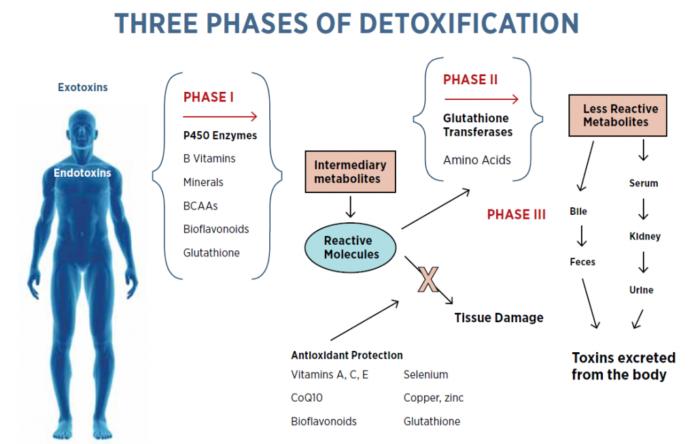 Детоксикация имеет 3 фазы