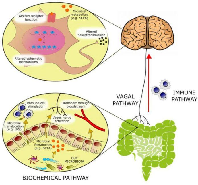 Микрофлора кишечника и пробиотики оказывают влияние на эмоции человека