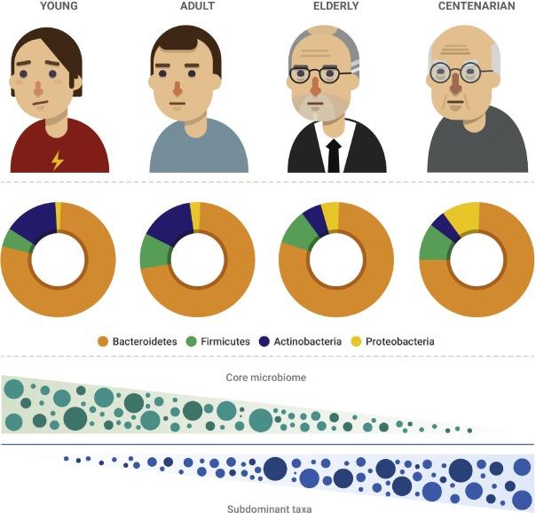 Микрофлора кишечника меняется при старении
