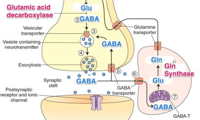 Глутаминовая кислота в головном мозге