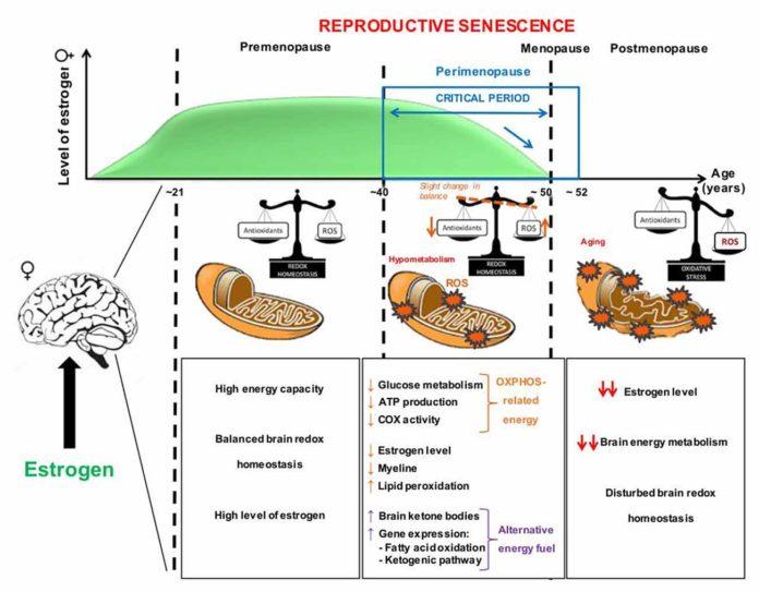 Менопауза ухудшает здоровье митохондрий
