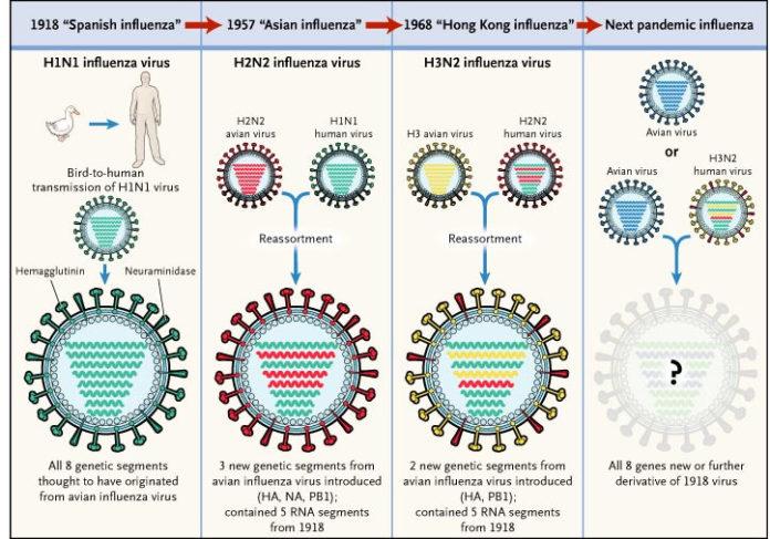 Вирус гриппа H3N2