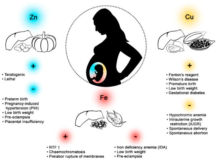Влияние меди на беременных женщин