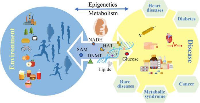 Эпигенетика указывает на предрасположенность к заболеваниям