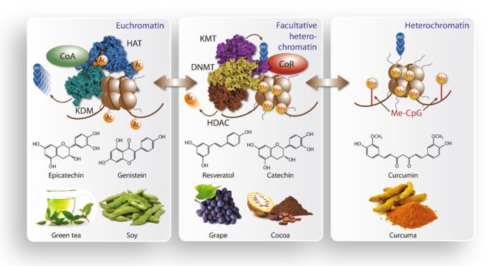Как вещества из продуктов питания влияют на эпигеном