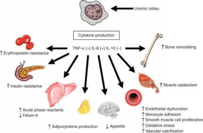 Влияние фактора некроза опухоли на различные органы