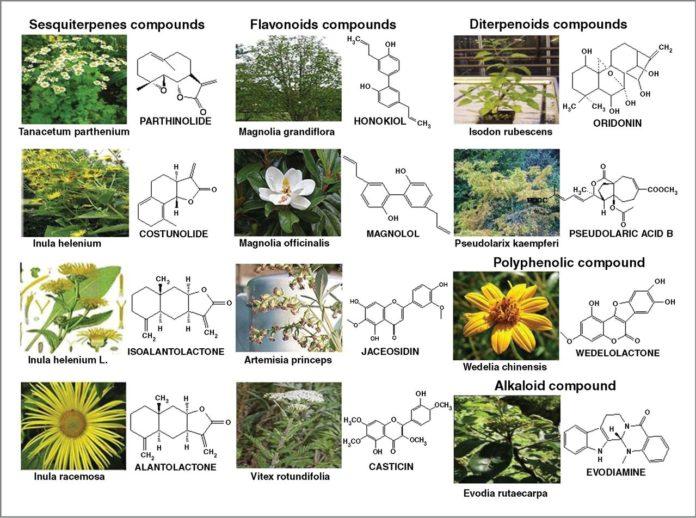 Природные вещества с противовоспалительным действием
