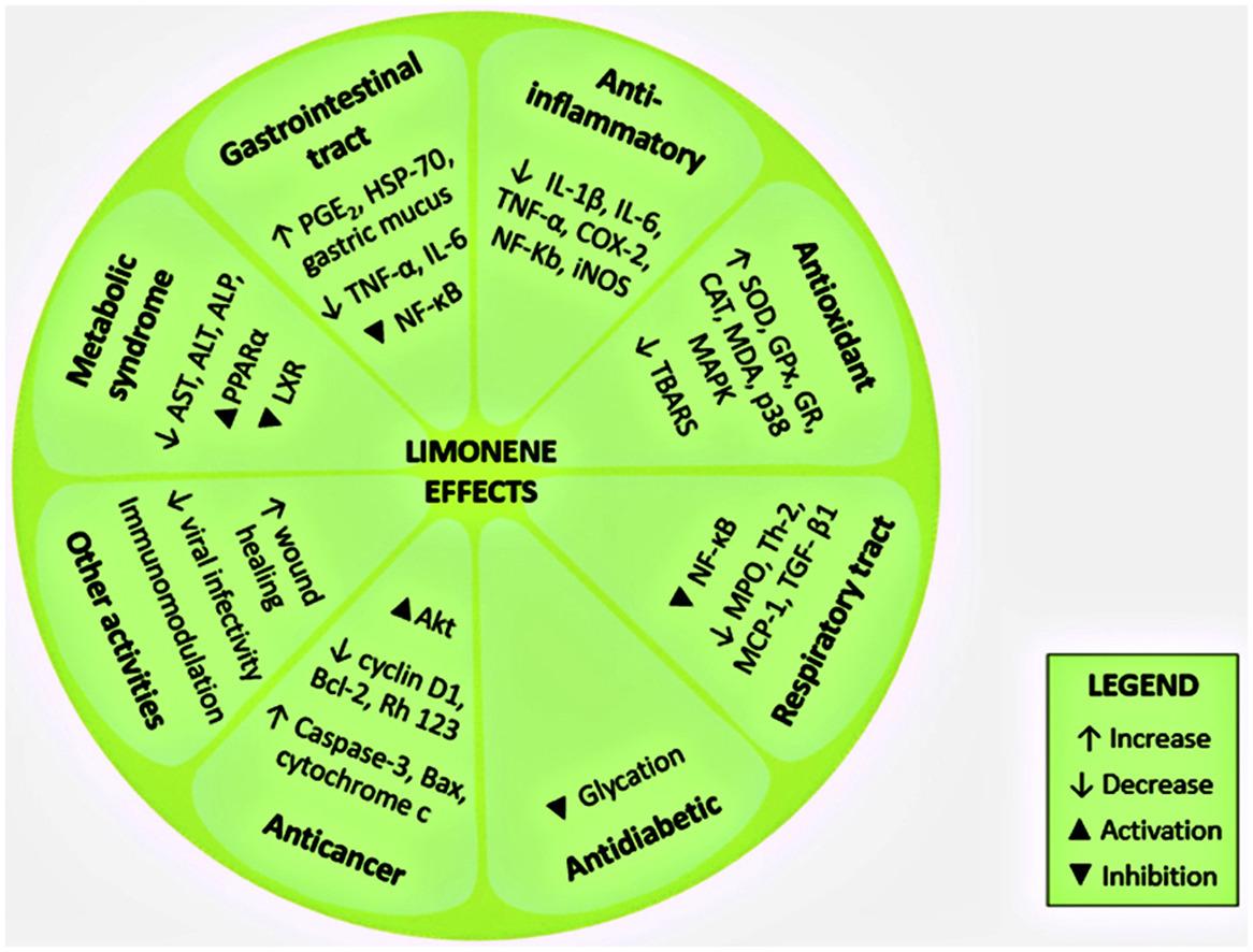 D-лимонен и его воздействие на организм
