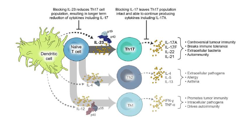 Иммунные клетки участвующие в псориазе
