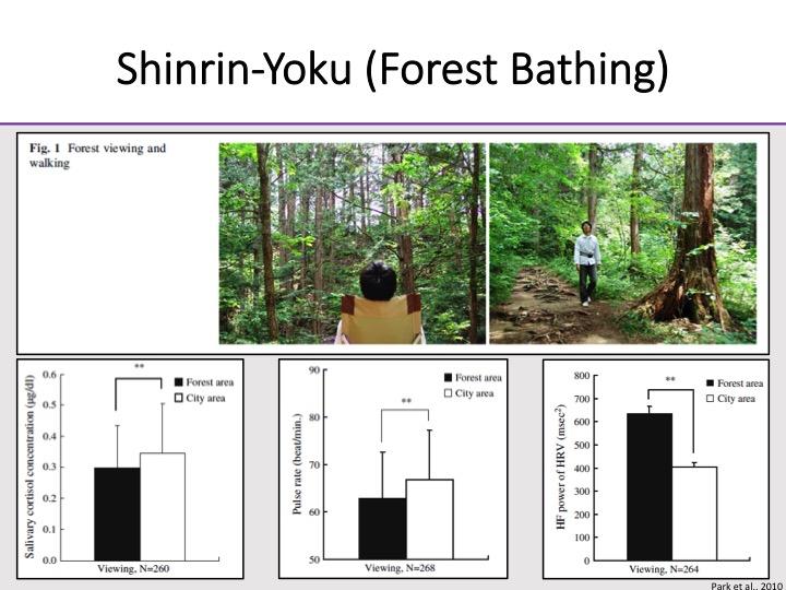 Прогулка по лесу сильно помогает здоровью