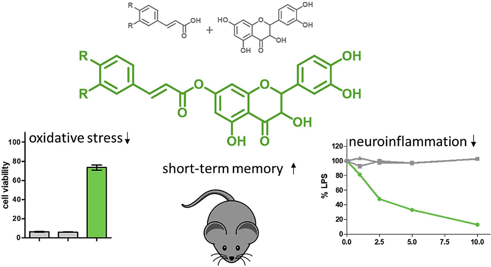 Дигидрокверцетин улучшает память
