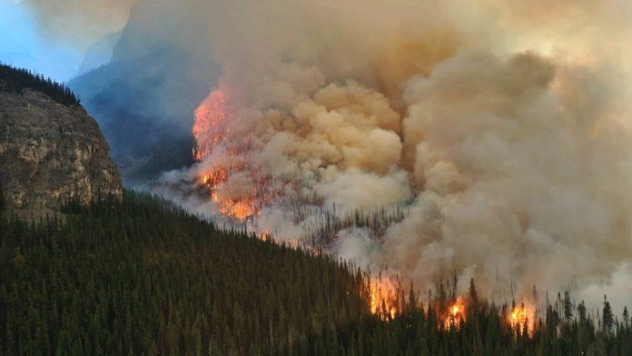 Дым лесного пожара
