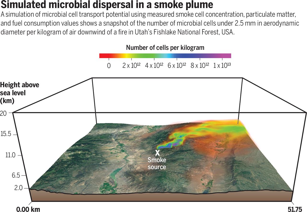 Дым лесного пожара как переносчик микробов