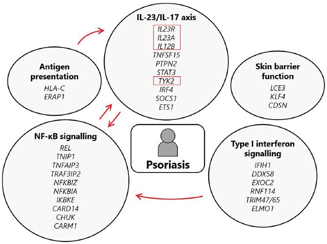 Гены, как причины псориаза