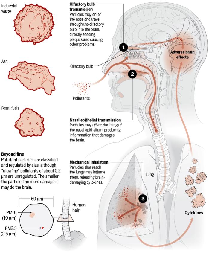 Твердые частицы воздуха могу вызывать болезнь Альцгеймера