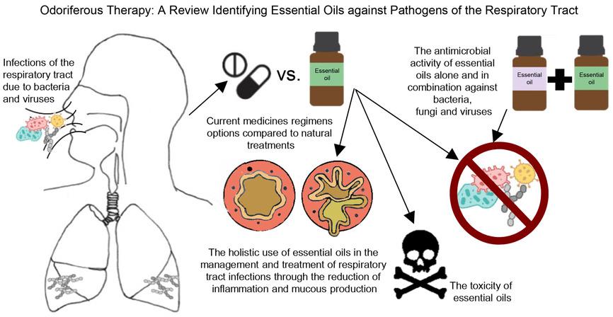 Схема использования эфирных масел растений для лечения вирусных и бактериальных пневмоний