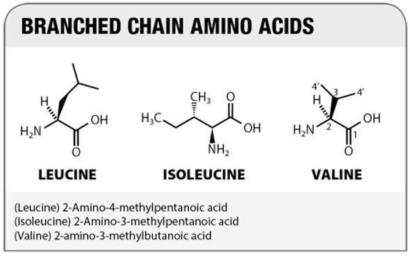 Лейцин - аминокислота BCAA