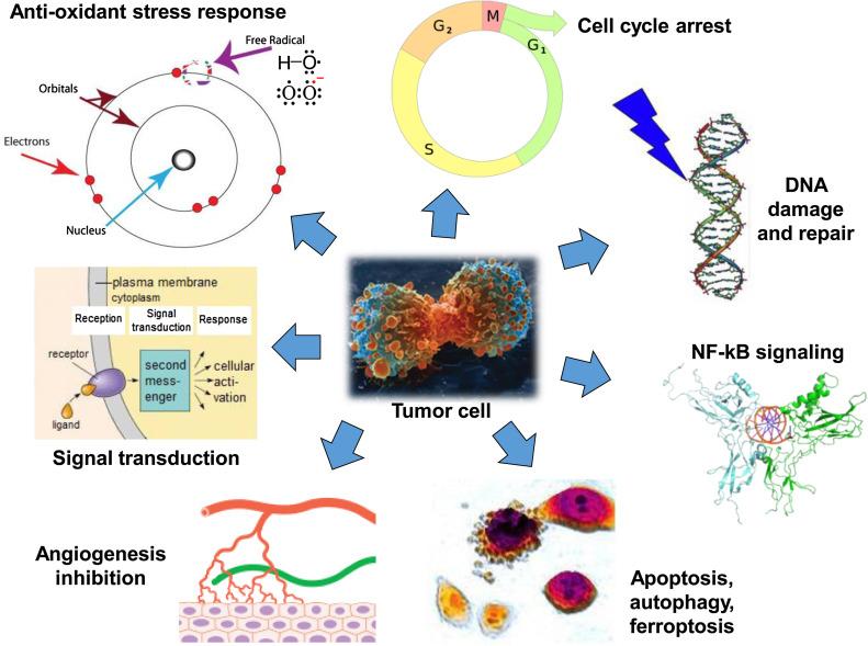 Развитие раковых клеок