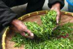 Полифенол зеленого чая EGCG может помочь снизить риск развития рака