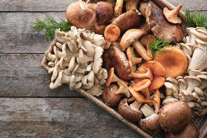 Добавление грибов в питание